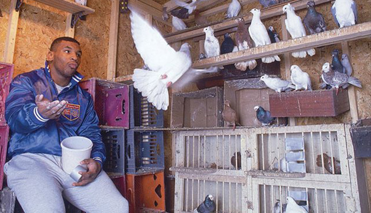Mike Tyson collects pigeons